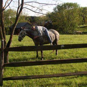 Heidi-on-Zeus-in-Pasture-1024x452