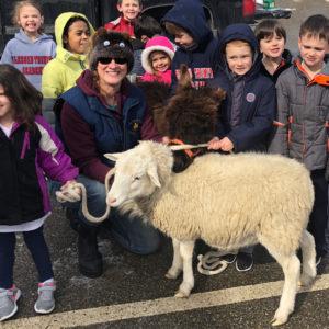 Lamb-at-DayCare
