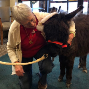 Mini-Donkey-at-Nursing-Home