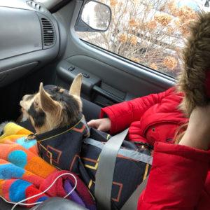 traveling-Goat